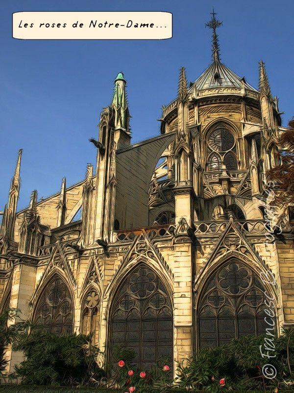 Les roses de Notre-Dame