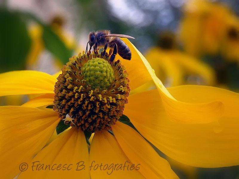 L'abeille et l'araignée