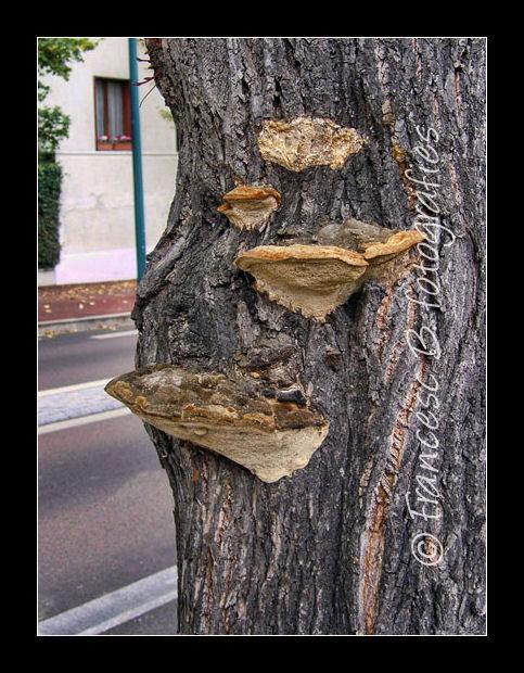 Sur un tronc de tilleul