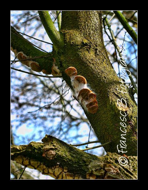 Sur un tronc de prunus