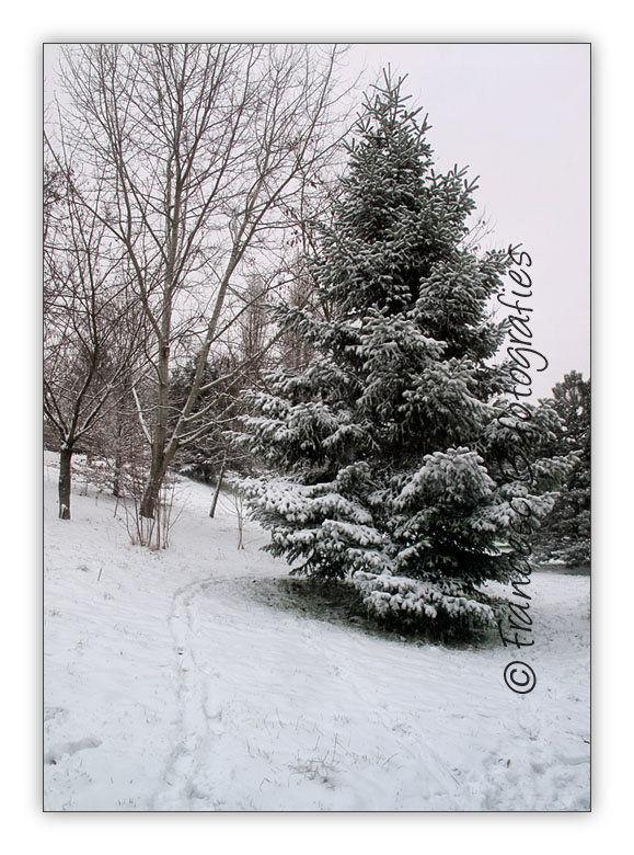 Première neige - 2
