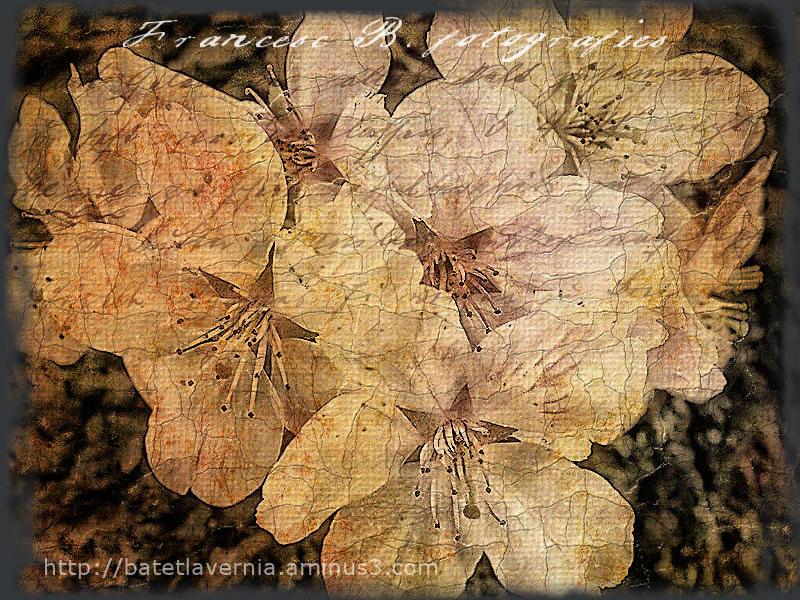 Vintage spring (texture)