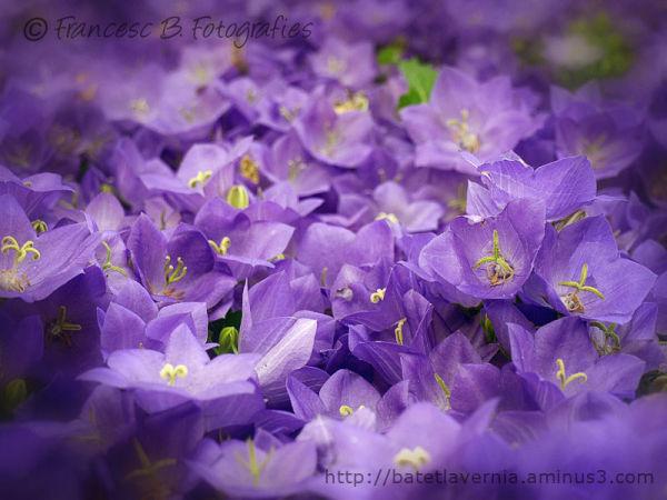 Symphonie en violet majeur