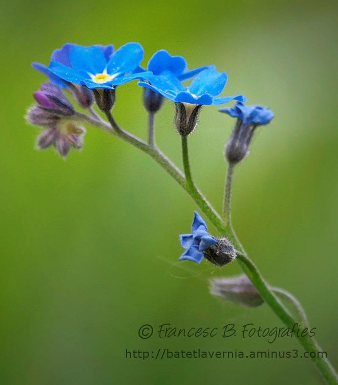 Du bleu ...