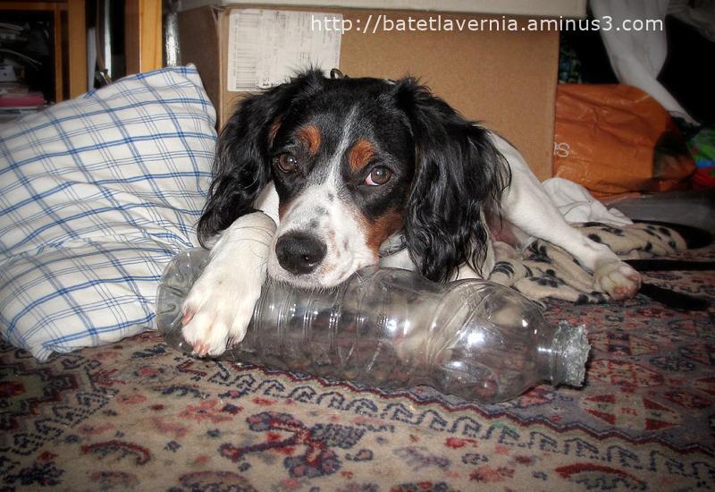 C'est ma bouteille