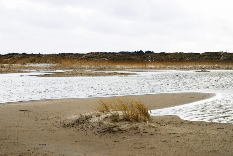 Skagen beach bird