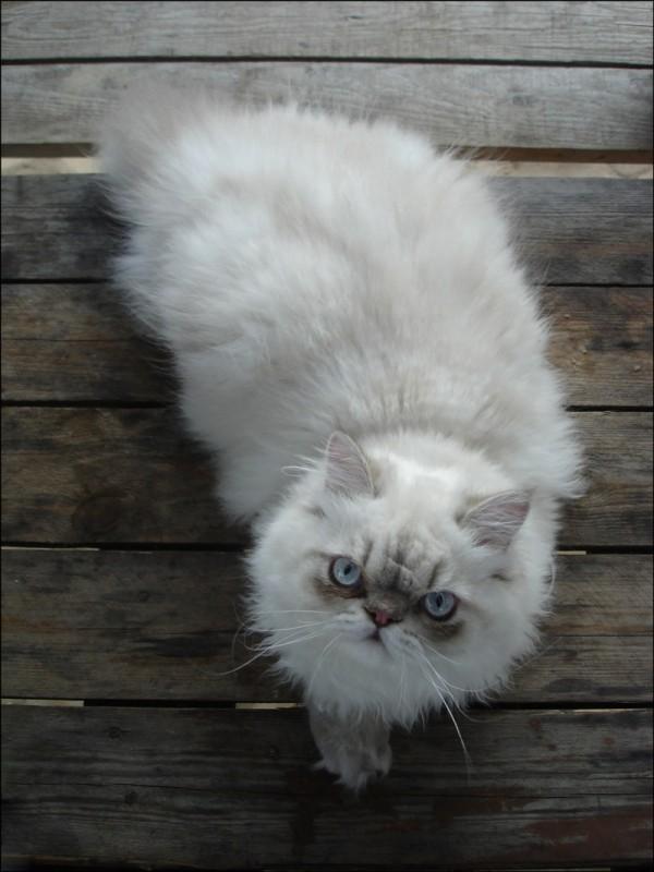 His name is Solomon)