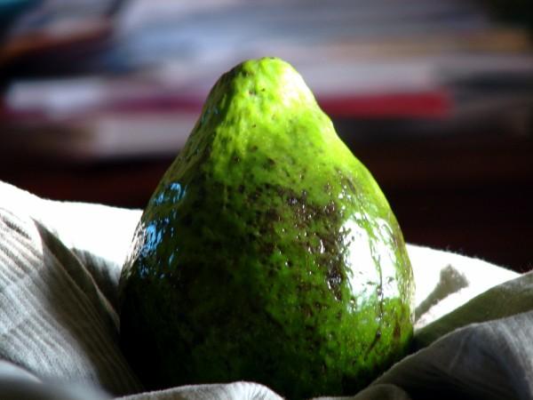 Avocado plain and simple