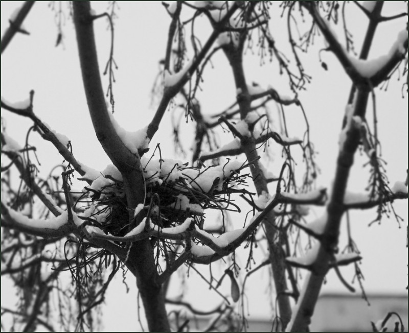 winter of our discontnent