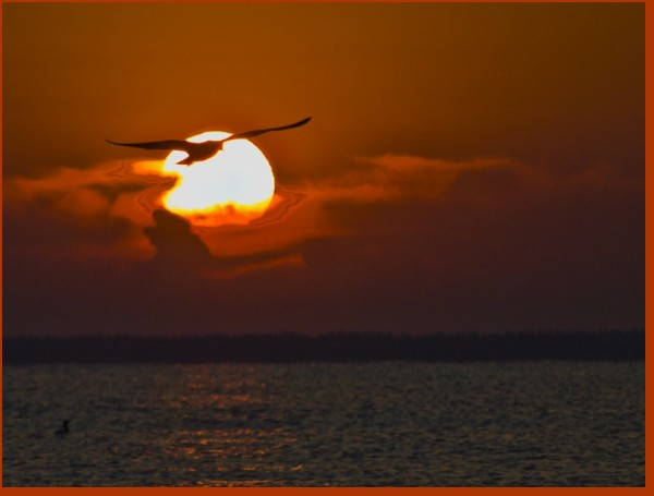 valenttin pescarus soare sun soleil seagull