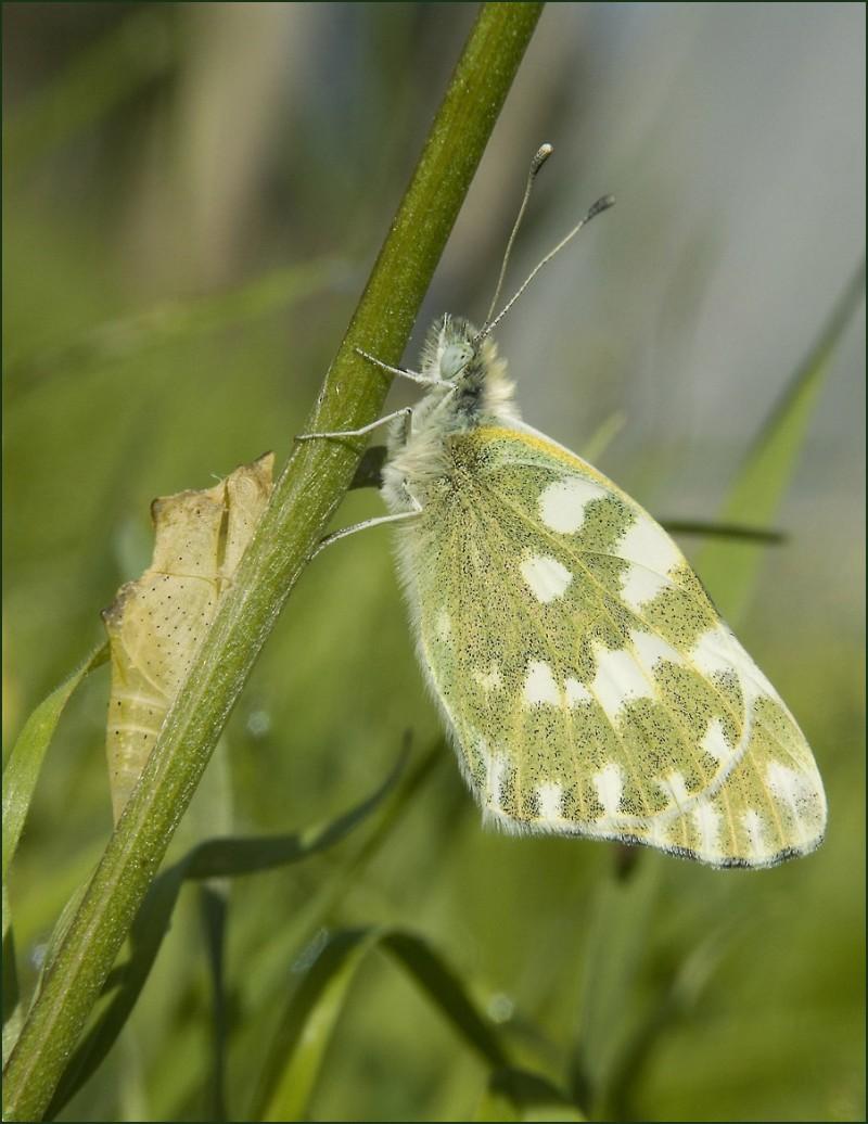valenttin fluture papillon butterfly new life