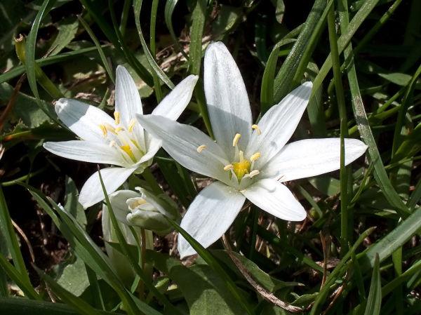 valenttin fleur