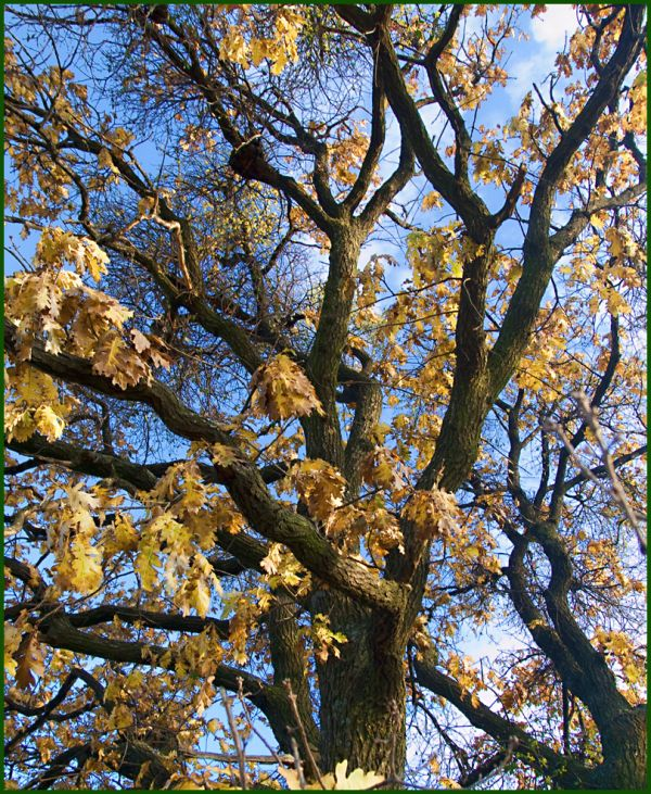 autumn rhapsody