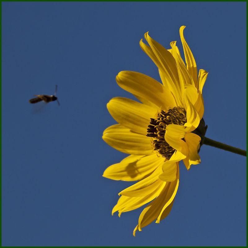 blue sky, yellow flower