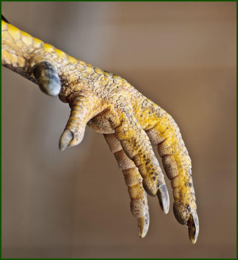 avant la manicure