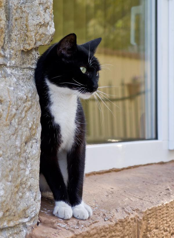 cat one