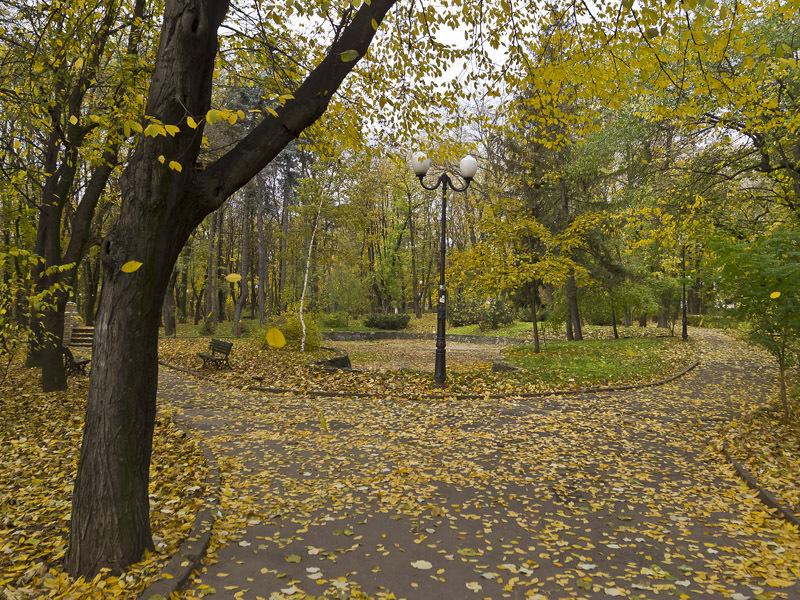 autumn: falling leaves
