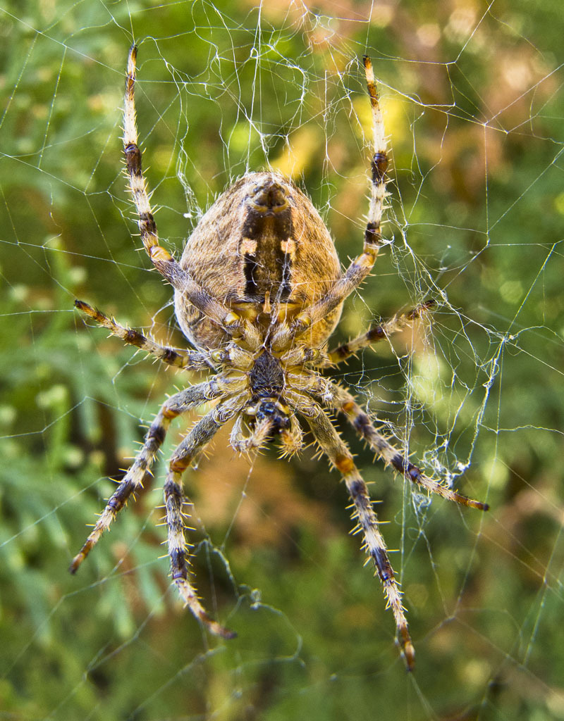 dangerous net