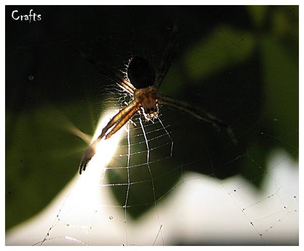 spider laba-laba