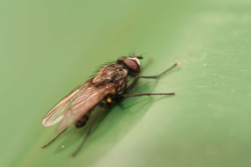 Side view of a fly
