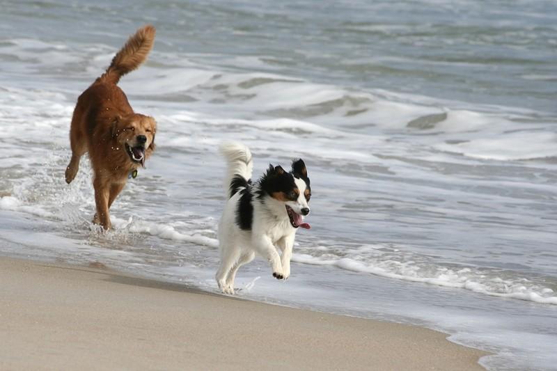 Jake & Mali on the Beach