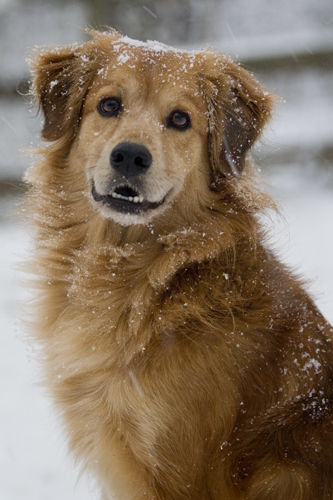 Happy snow picture