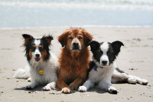 3 friends at the beach