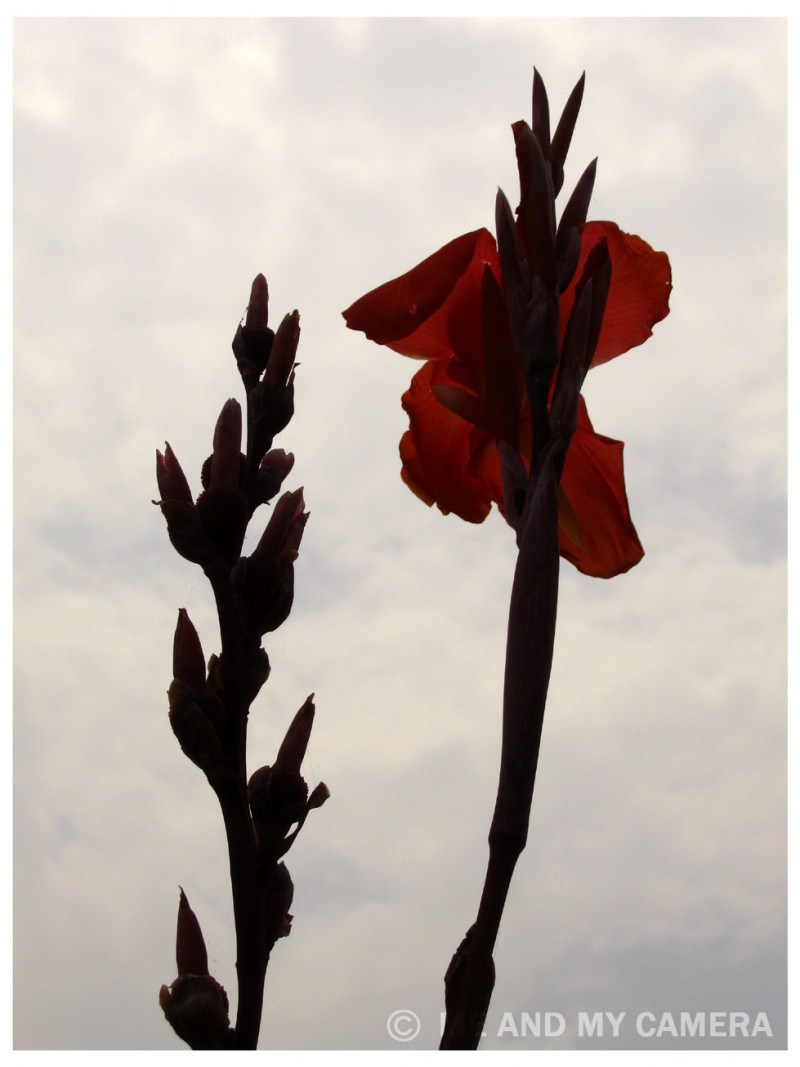 Red Flower touch the Sky