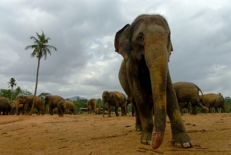Hiriwaduna Elephant Orphanage, Sri Lanka