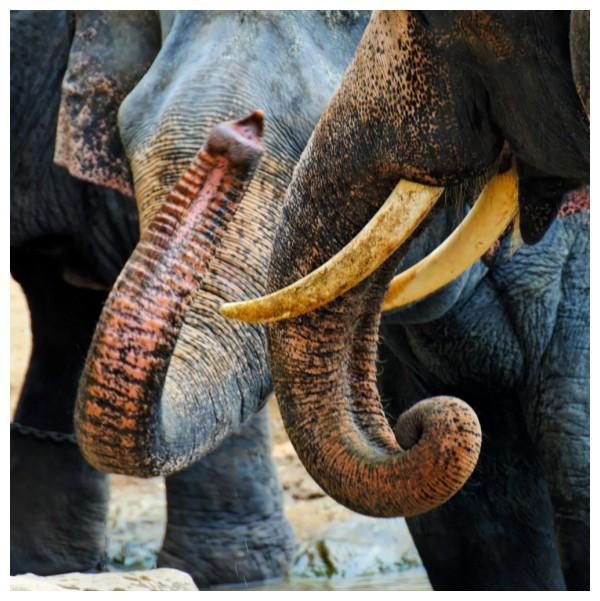 Hiriwadunna Elephant Orphanage, Sri Lanka