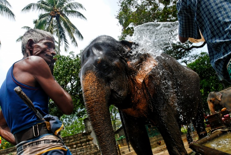 Elephant washing, Kandy, Sri Lanka