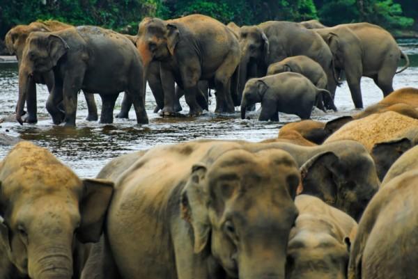Hiridunawa Elephant Orphanage, Sri Lanka