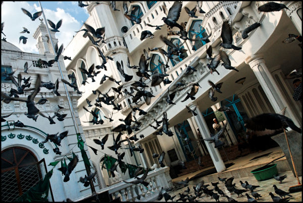 Pigeons taking off a mosque courtyard, Colombo