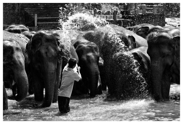Shower at Pinnewala Elephant Orphanage, Sri Lanka