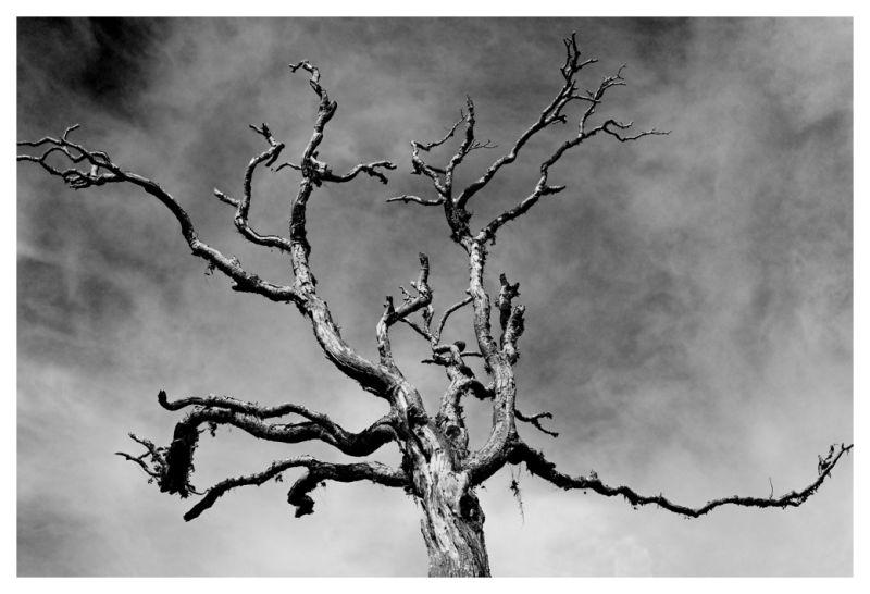 Dead tree in Horton Plains, Sri Lanka