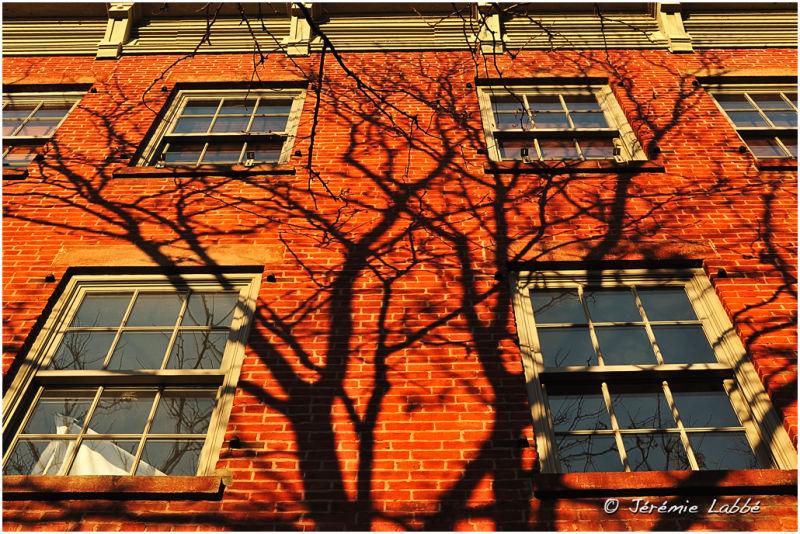 Last sun rays on a building of Williamsburg, NY