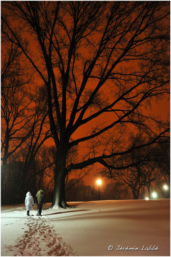 Snow in Central Park by night, New York