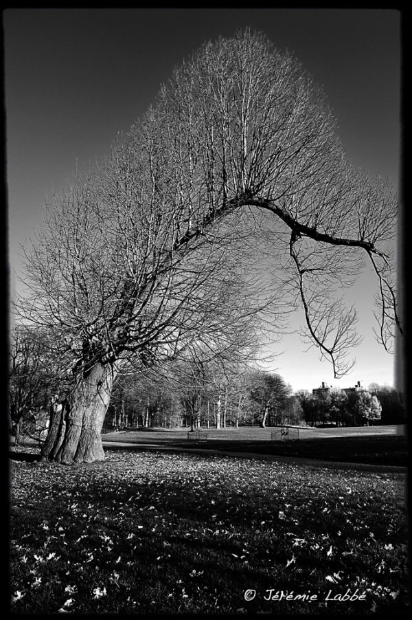 Tree in Prospect Park, Brooklyn.