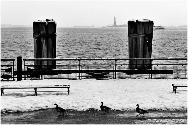 Three ducks along a pier, Battery Park, New York