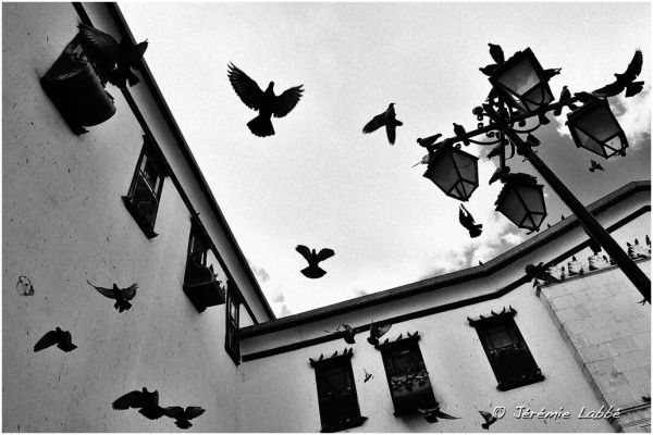 Pigeons taking off a square in Damascus, Syria