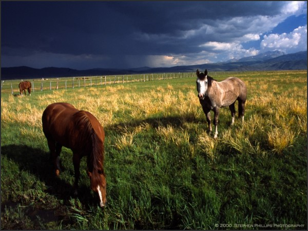 Horses Before The Storm