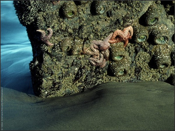 low tide reveals sea life near The Golden Gate