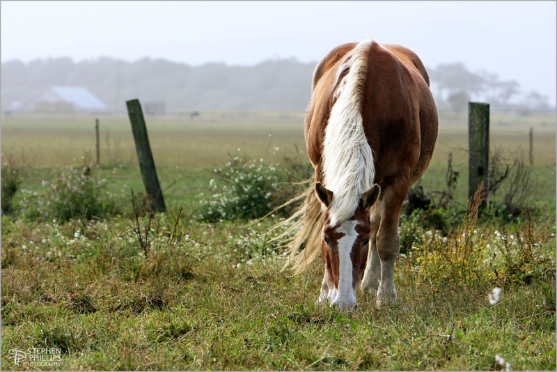 horse at pasture on Cannibal Island Road