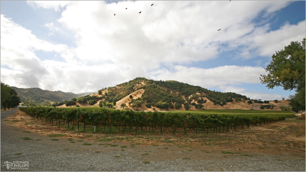 Storm clears over a Ukiah Vineyard