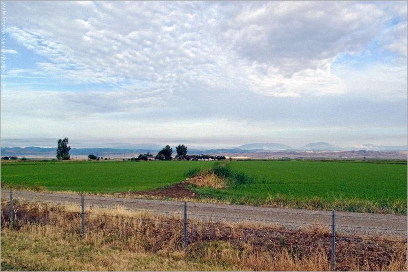 rice farming in the Sacramento Valley
