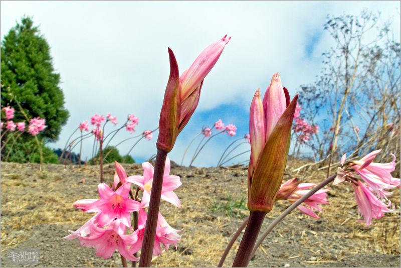 wildflowers at Pie ranch - coastal california