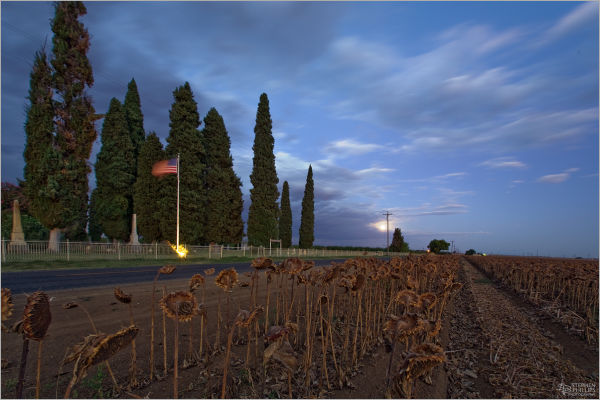 Full moon and sunflowers at Cottonwood Cemetary