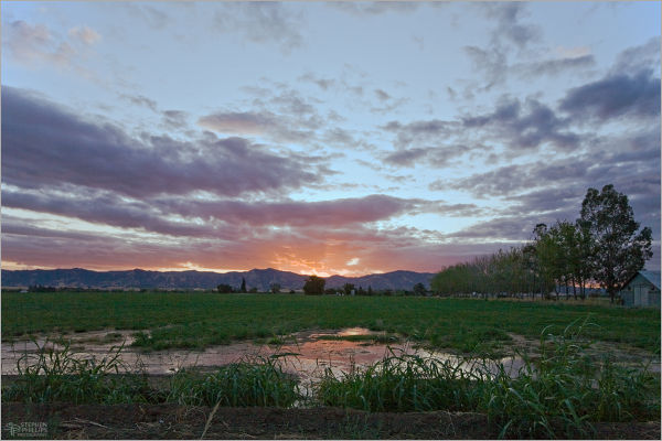 sunset at a California rice farm