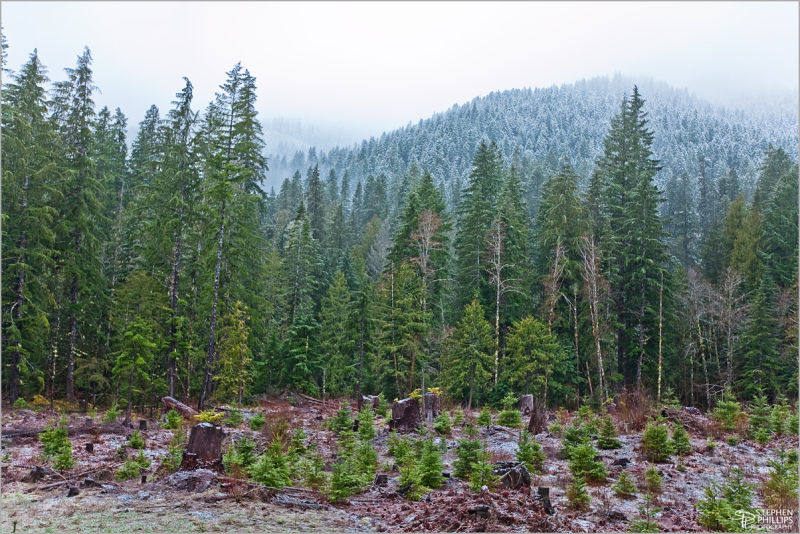 Forest in the Santiam River Valley