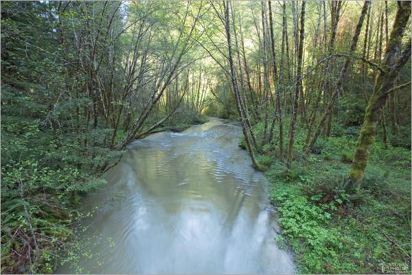 Lost Man Creek, Del-Norte County, California